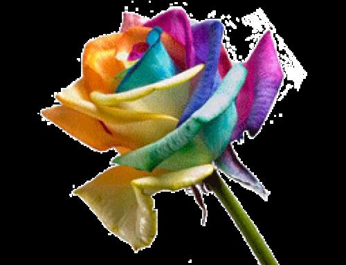 Mawar arti dan maknanya