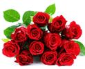 bunga-mawar-merah-12-batang