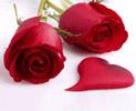 bunga-mawar-merah-2-batang
