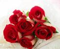 bunga-mawar-merah-6-batang